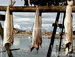 stockfish hanging near the sea