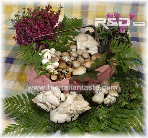 assorted fresh mushrooms, the photo shows fall mushrooms surrounded by typical fall plants  (heather, cyclamen, bracken leaves)