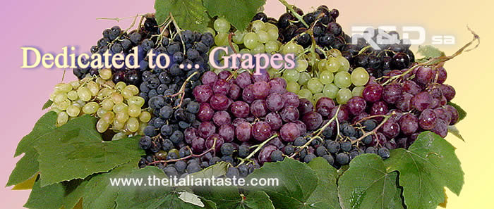 Dedicate to ... grapes